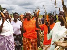 Biofortification: An Agricultural Investment for Nutrition