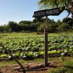 Biofortified food crops growing in a municipal garden in Itaguaí, Brazil. Photograph: Embrapa